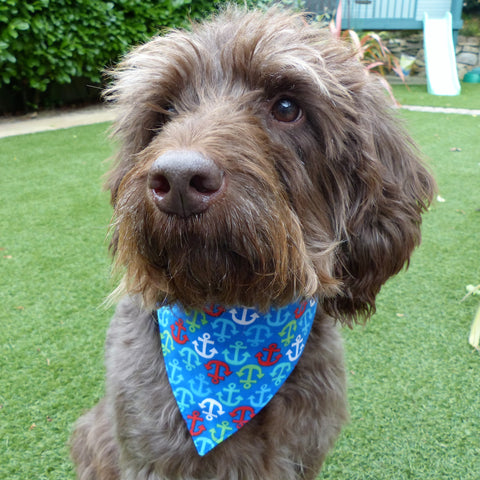 Hootchie Pooch Dog Bandana (Multi-Coloured Anchors)
