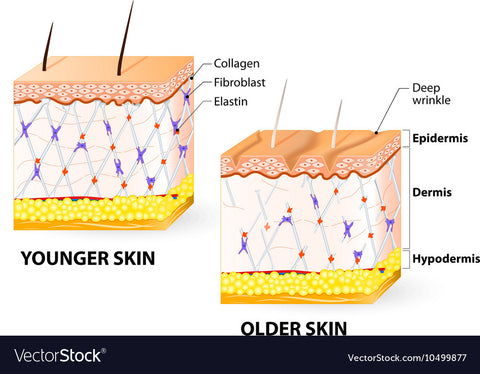 Collagen Will 100% Save Your Skin! 4