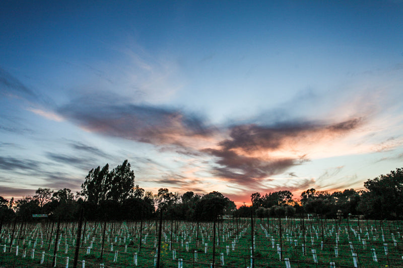 Art House Wines | Vineyard Sunset
