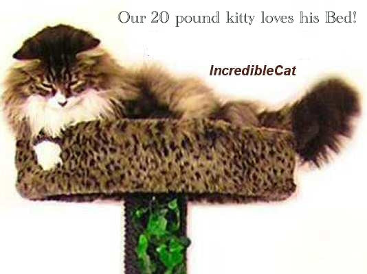 High Quality 5 Foot Colorado: 2 Luxury Cat Beds U0026 Tunnel