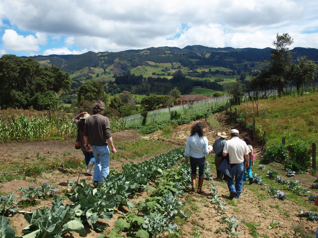 Group walking through the farm