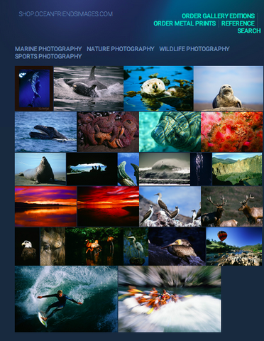 Ocean Friends Images Gallery Edition Catalog