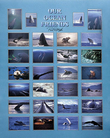Ocean Friends Images Poster