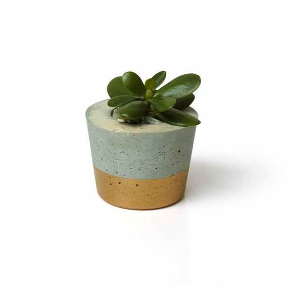 Concrete Organic Stocky Planter - Harrison & Co - Lifestyle & Design