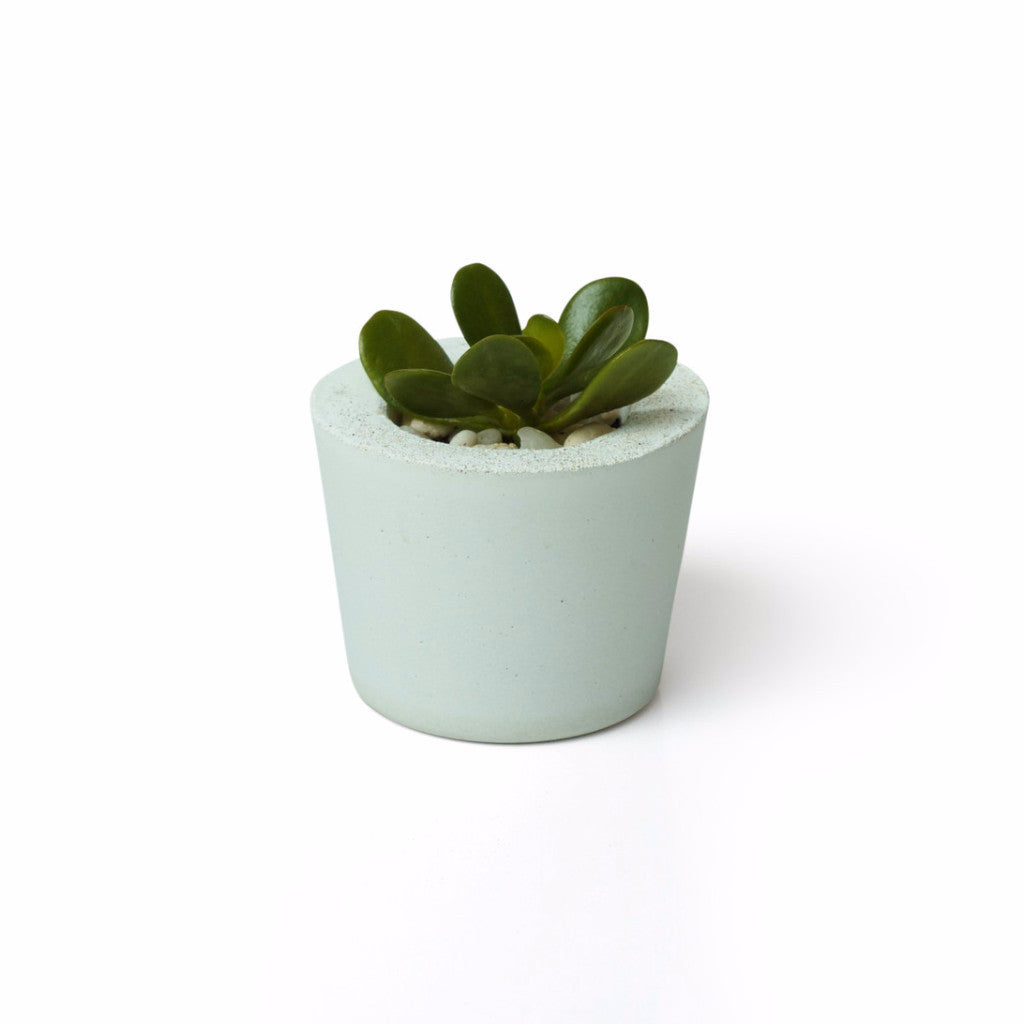 Stocky Round White Concrete Planter - Harrison & Co - Lifestyle & Design