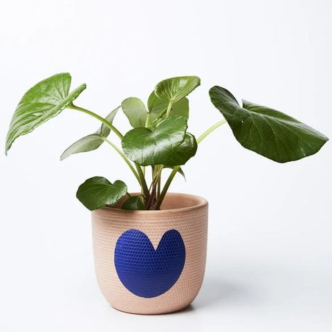 Heart Pot (Multiple Colors)