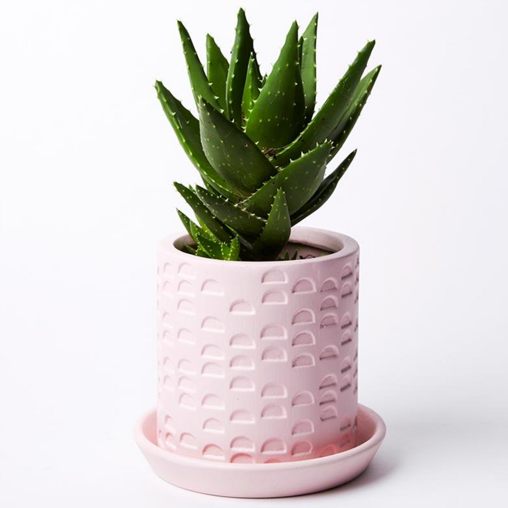 Semi Circle Tray Planter Pink