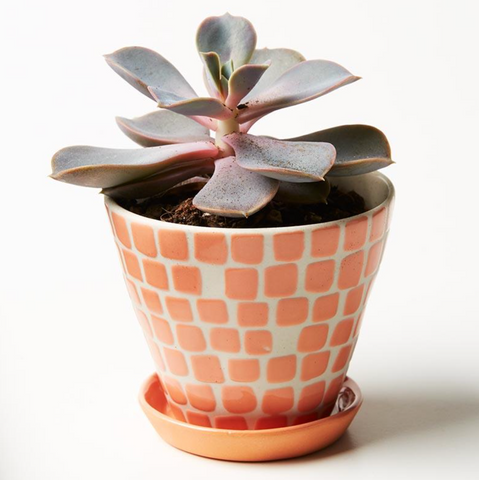 Pocket Planter Peach Tile