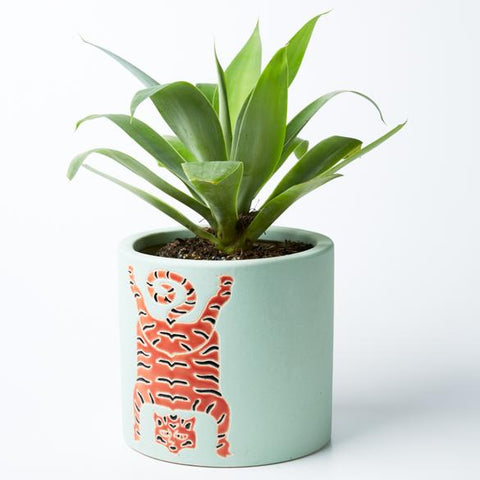 Tibetan Tiger Planter (Multiple Colors)