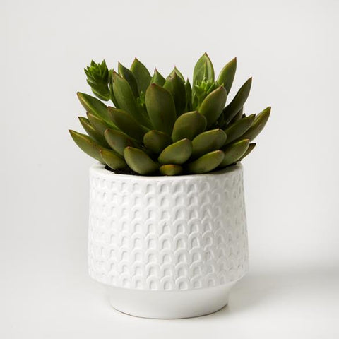 Arches Planter - White