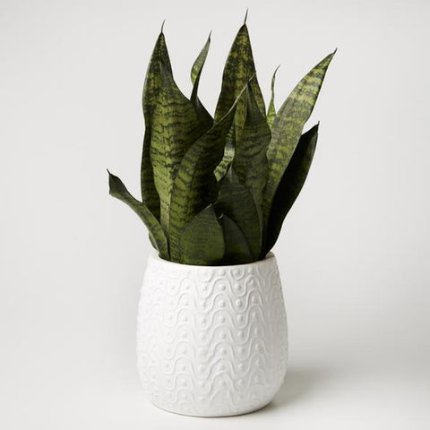 Curves Planter - White