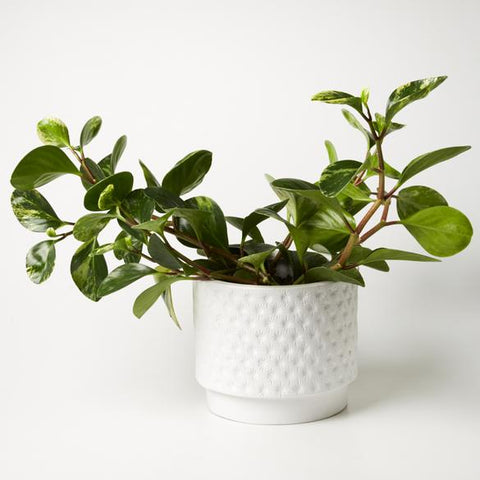 Footed Star Planter - White