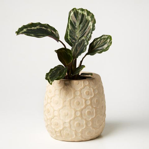 Ditsy Planter (Multiple Colors)
