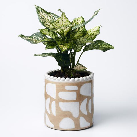 Papercut Planter - Beige