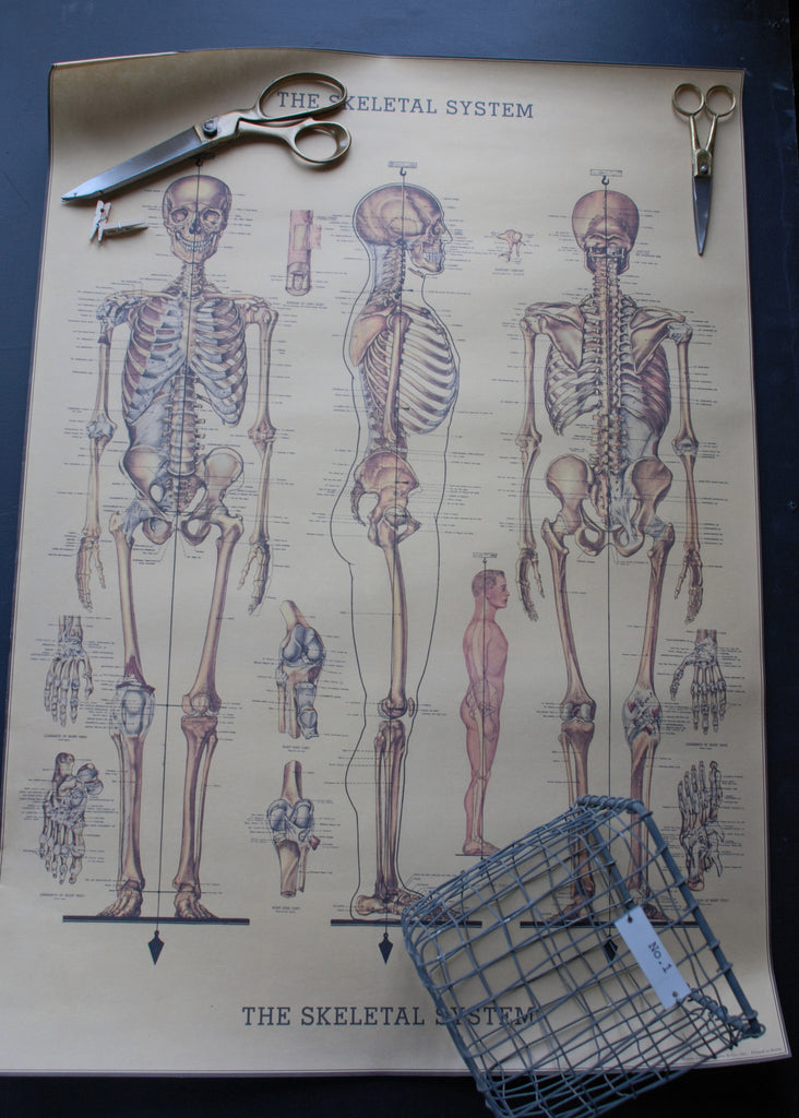 Cavallini Skeleton Wrapping Paper - Montys Vintage Shop - 1