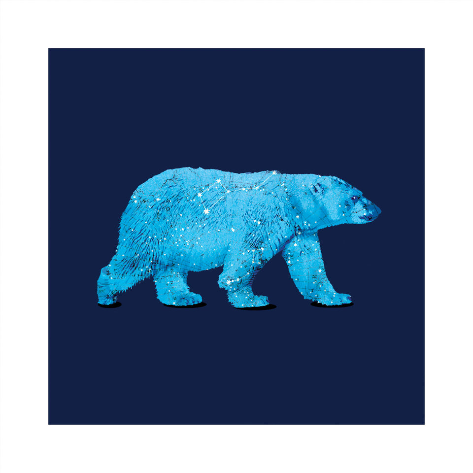 'Polaris' Bear