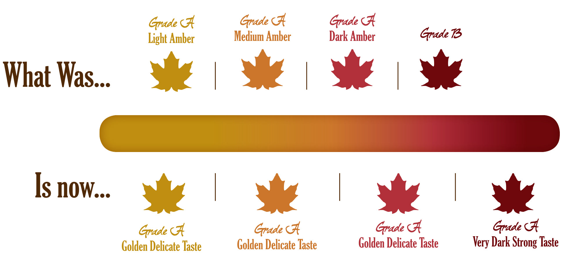 Maple Syrup Grades <h1></h1> – Bens Maple Syrup