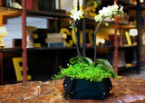 Woolly Pocket Island Tina w/Reservoir (works indoors and outdoors) (Color: Black) Garden (Modular, Sustainable, Eco, Green) Planter