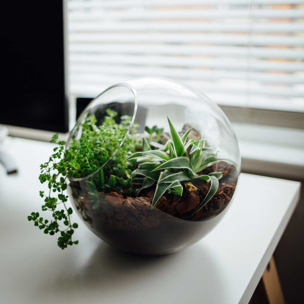How Do You Make a Terrarium