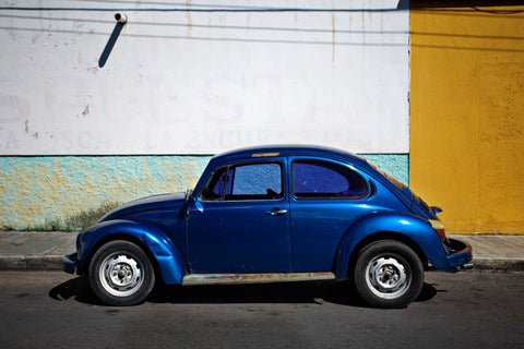 Blue Bug on Blue