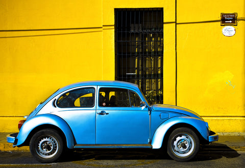 Blue on Butter Bug
