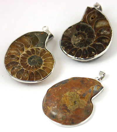 Ammonite Fossil Pendant with SILVERTONE Setting