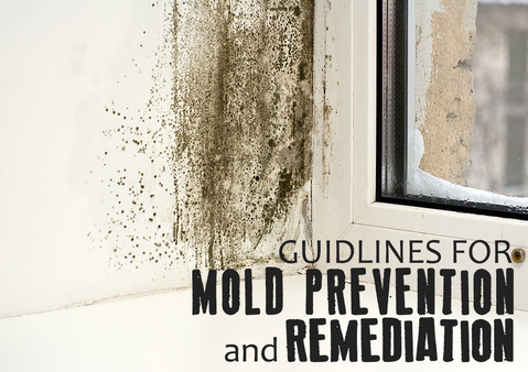 Mold Remediation Covered by Insurance