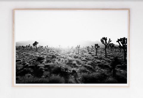 Joshua Tree Sunset 40x60 $2,600