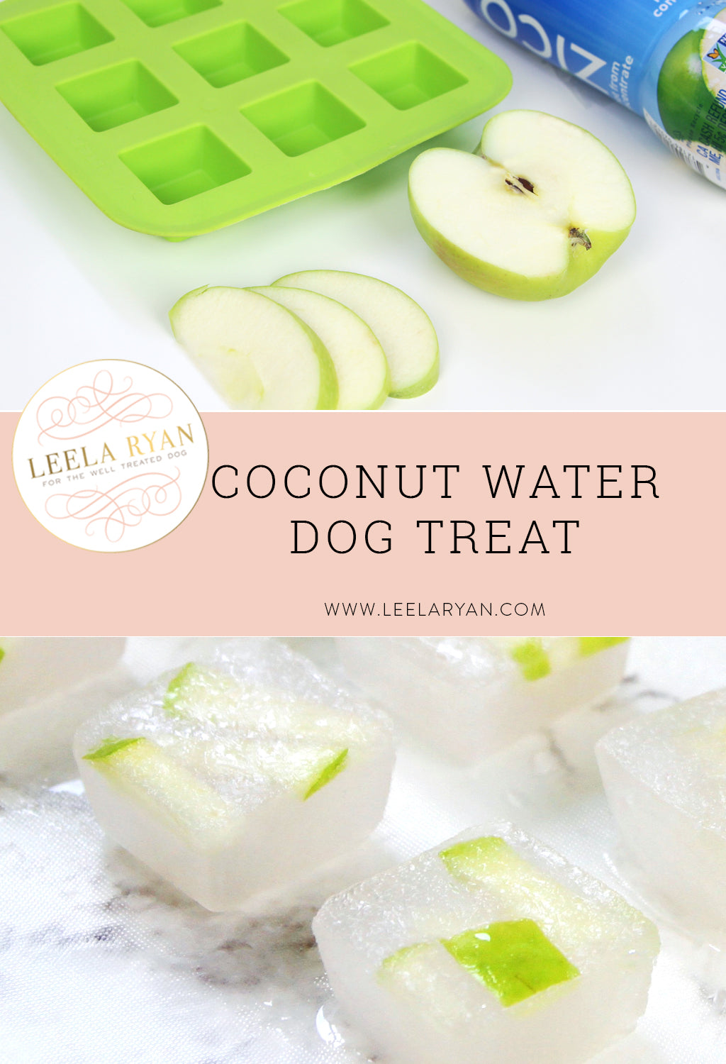 coconut water frozen dog treat