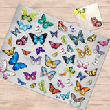 Butterflies Paper Placemat & Coaster Set - Set of 12