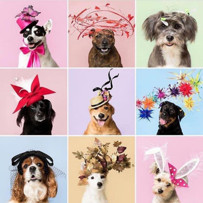 Jess' Top Christmas Present Pick: Haute Dogs Calendar 2019