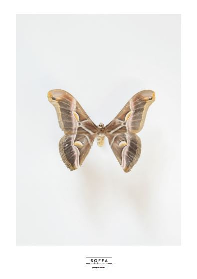 Poster BUTTERFLY