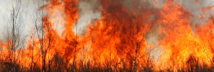 Panorama image of a large wildfire burning trees