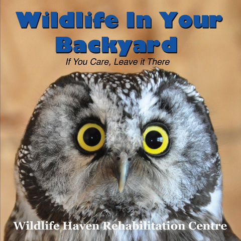 Wildlife In Your Backyard Book