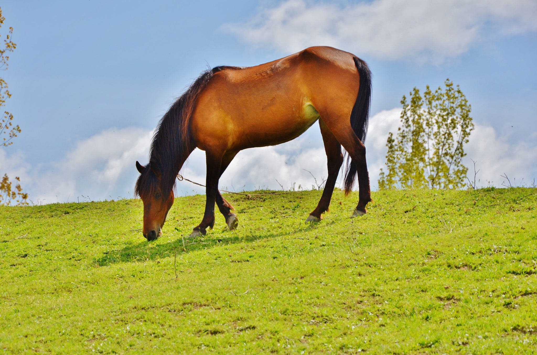 Equine Liability Law Signs