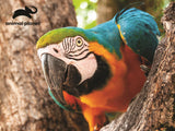 Parrot 63pc Prime 3D Effect Animal Planet Jigsaw Puzzle