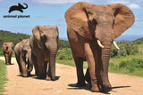 Elephants 150pc Prime 3D Effect Animal Planet Jigsaw Puzzle