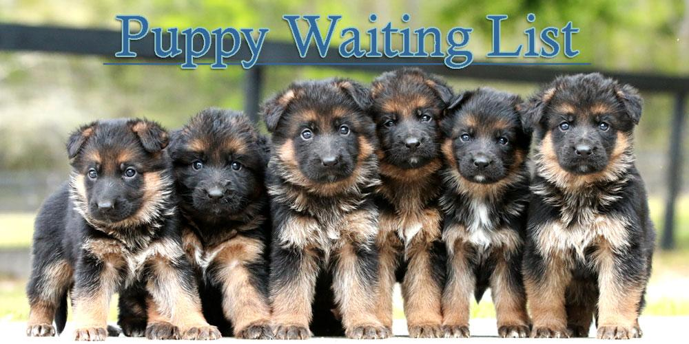 Puppy Waiting List