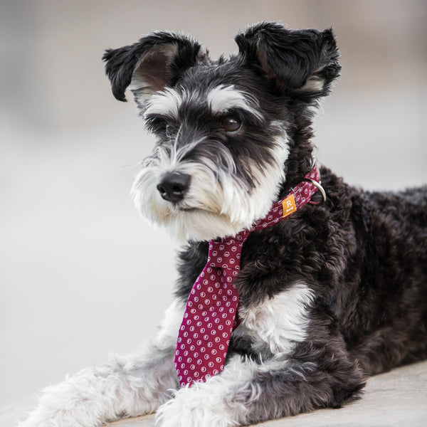 Dog Tie Collar