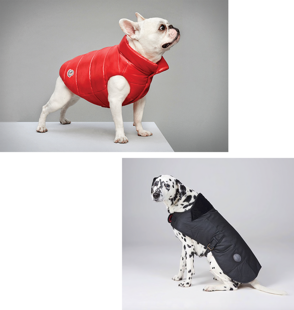 ultimate winter dog coat guide