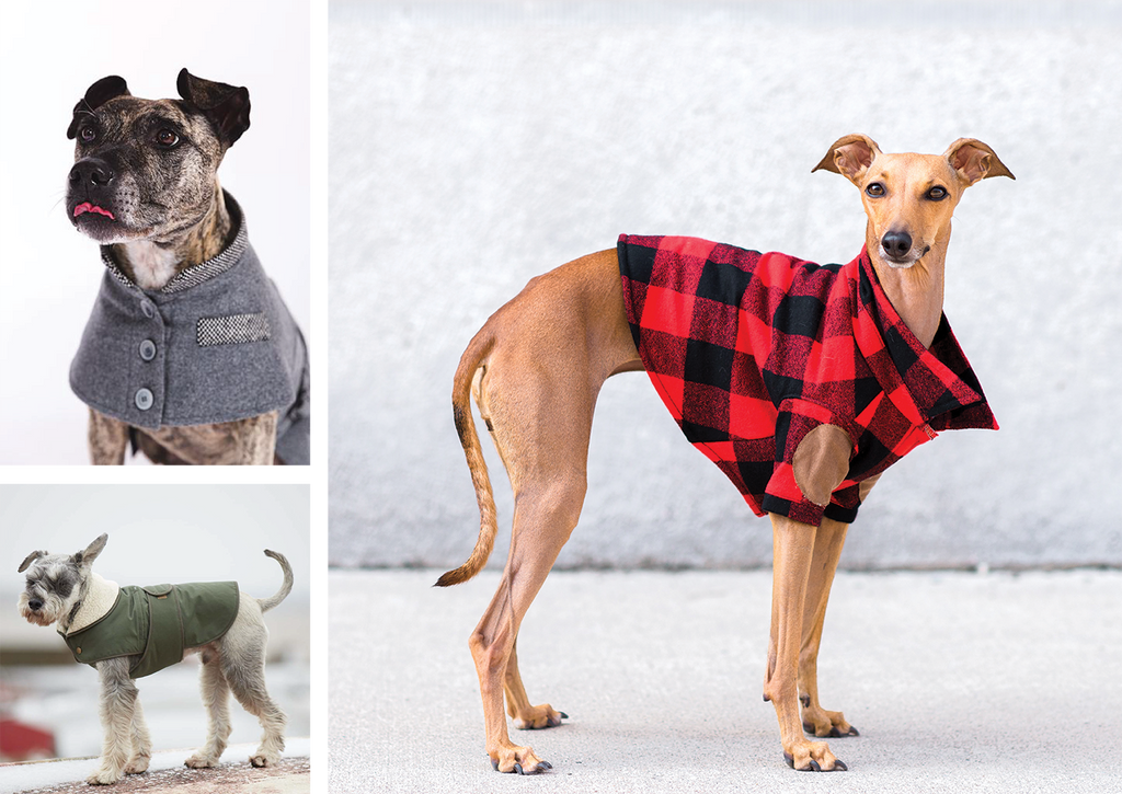 Ultimate guide to winter dog coats