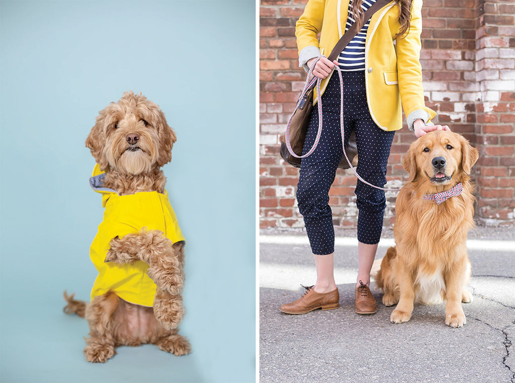 dog wearing yellow tee shirt and dog wearing bow tie collar and matching leash, dog photography tips from gooseberry studios
