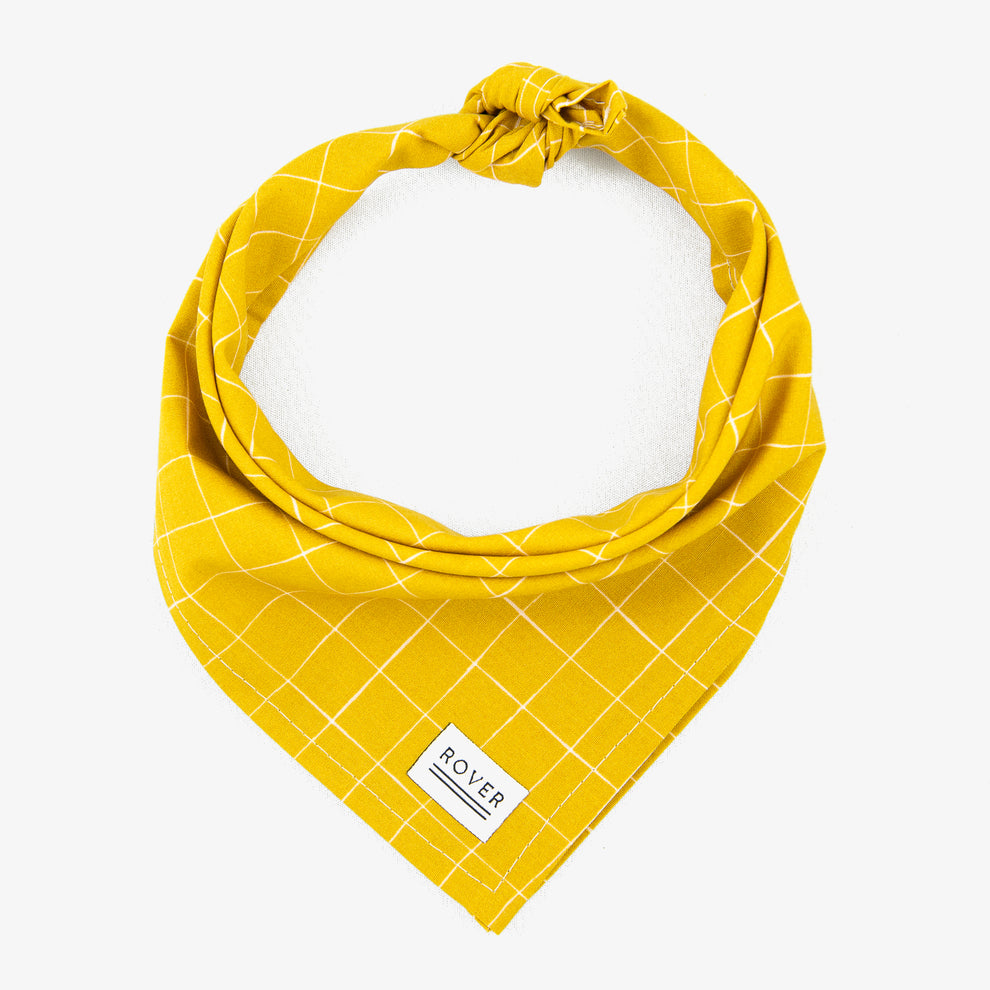 Yellow Dog Bandana