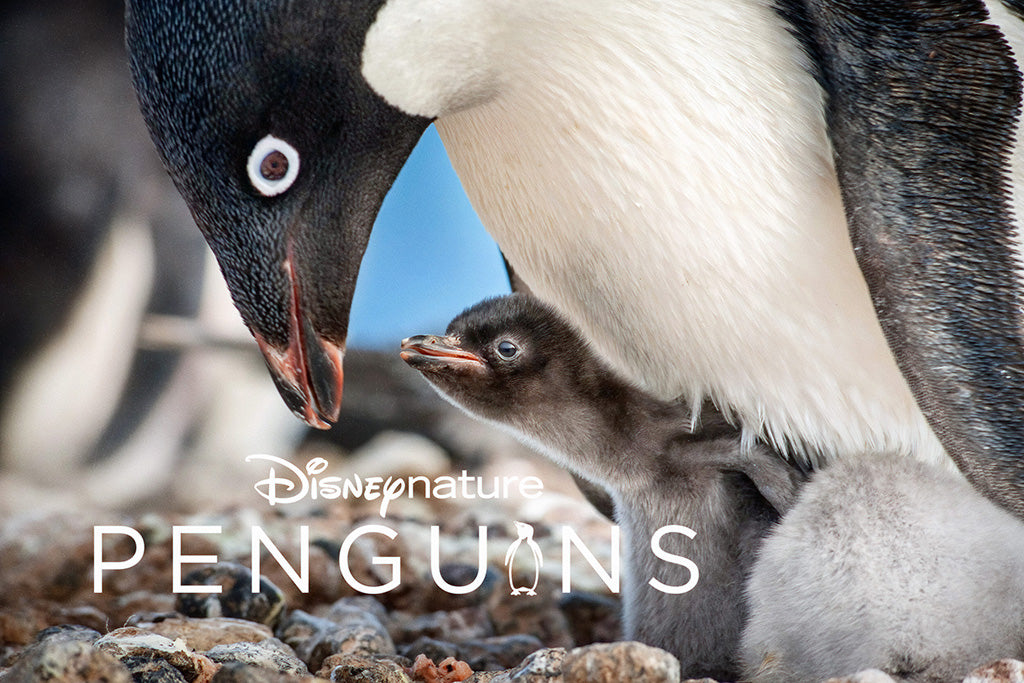 Penguins Film Poster