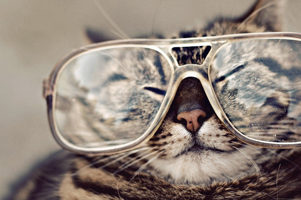 Cat Glasses Funny Prank Poster