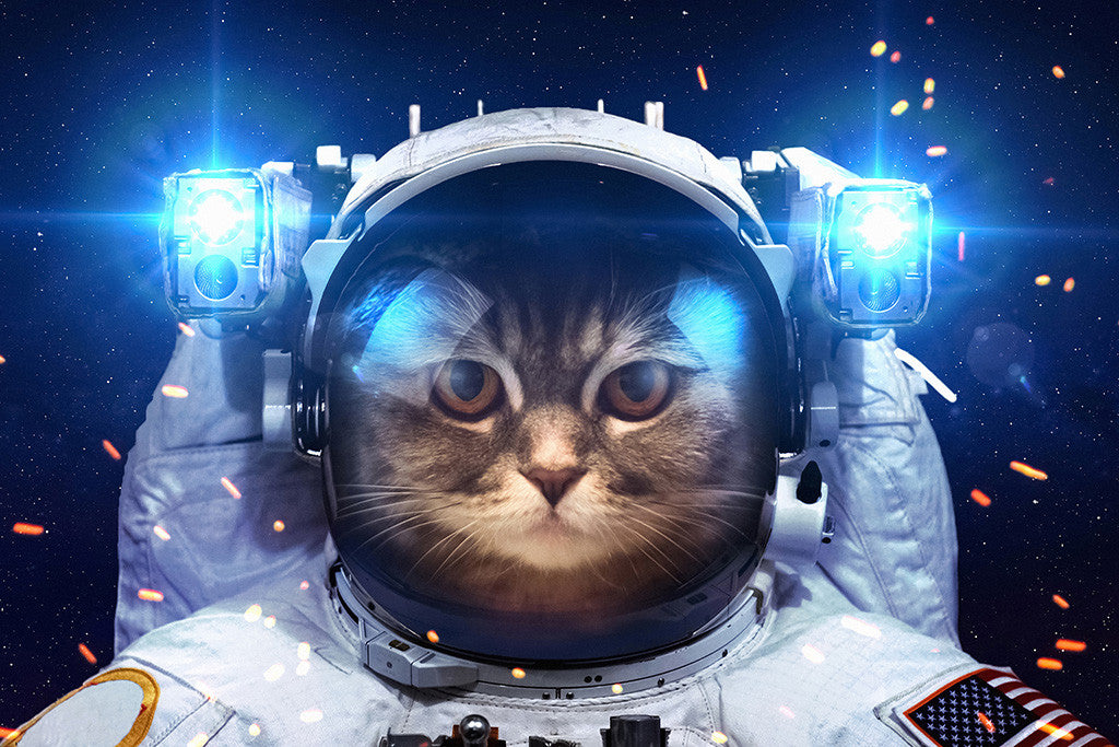 Cat in Open Space Humor Funny Poster