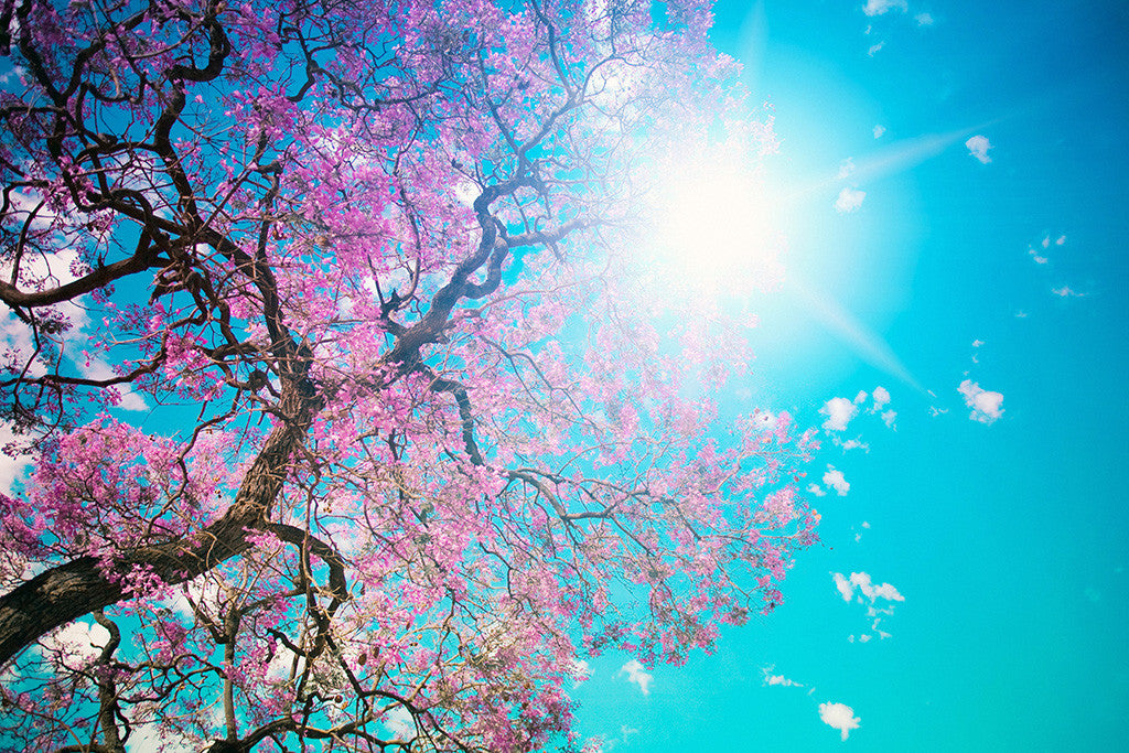 Beautiful Landscape Nature Trees Blue Sky Poster