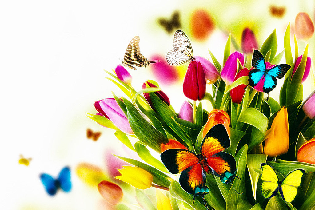 Flowers Beautiful Rose Spring Butterflies Poster