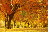 Beautiful Landscape Park Forest Trees Autumn Poster