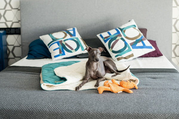 Dreamy Mint Dog Blanket - Jolly and Bea's - 4